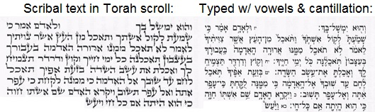 Torah text scribal and typed with vowels and catnillation